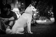 (thalesrenato) Tags: black white photography monochrome monocromático monocromatic dog animal cute cutie park cachorro parque animals