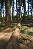 DSC02655 (Nai.) Tags: sonyrx100 taiwan taichung asia nature plants trees treeporn green greenness pine pinewoods lights shades