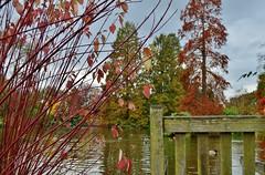 Looking out.... (stavioni) Tags: lake royal surrey society wisley hs horticutural