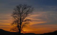 Sunset as seen from Fulking Sussex (B.Schroter) Tags: uk sunset sun canon sussex evening abend colours sonnenuntergang powershot sonne baum singletree wetter yelllow eveninglight wheather abendlicht sx200 berndschroter