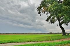 (Salva Tomatero) Tags: france tree verde green landscape arbol europe paisaje alsace campo paysage bas francia alsacia burnhaupt
