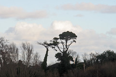 December bleak (Fuhirees {Back now catching up}) Tags: winter sky dublin lens s mc bleak manual 2012 135mm f35 carlzeissjenaddr