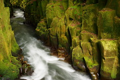 Te Whaiti Nui-a-Toi Canyon (blue polaris) Tags: park new forest river island moss north olympus canyon zealand nz column te basalt omd toi nui whirinaki em5 a whaiti nuiatoi