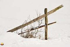 Fence in Snow at Knox Farm (DTB_5696) (masinka) Tags: statepark winter snow ny newyork fence landscape outdoors photography buffalo hiking historic trail knox simple minimalist westernnewyork eastaurora knoxfarm