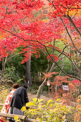 DSC_7829.jpg (d3_plus) Tags: park street autumnfoliage sky nature japan garden scenery outdoor fine sunny  streetphoto yokohama      j4   sankeien  sankeiengarden    nikon1   1nikkorvr10100mmf456 1 nikon1j4  bride marriage kimono