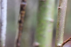 20130512_Urheia_Blomster-001 (onenetsirk) Tags: wallpaper dugg