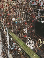 (xxkasia12xx) Tags: old snow bird birdcage vintage empty rusty cage rusted decor wintrymix oldbirdcage