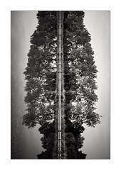 Arbre. (Scubaba) Tags: bw france tree monochrome canon canal blackwhite europe noiretblanc minimal reflet arbres minimalism arbre artois noirblanc pasdecalais minimalisme 5dmark2 5d