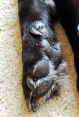 1457 (Jasper Kyodaina) Tags: man guy feet giant paw trampled squish sole stomp crush giantess trample walkover