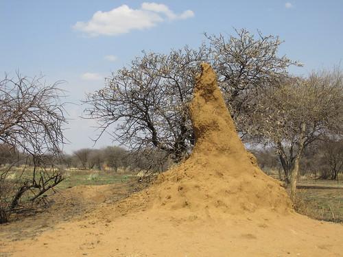 Termitière, Namibie