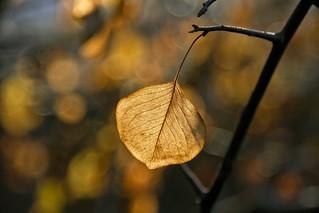 Leaf in Sunlight (Exlored)