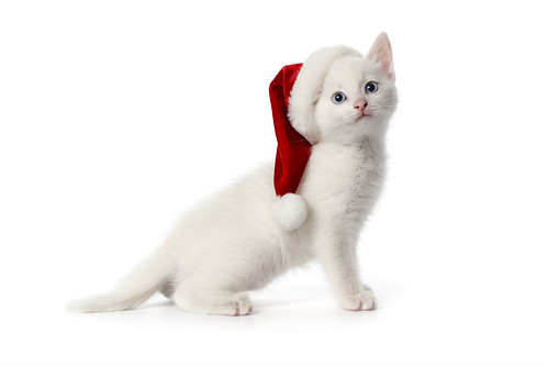 Cute Merry Christmas Cat Computer Desktop Hd Wallpaper Stylish Hd Wallpapers A Photo On Flickriver