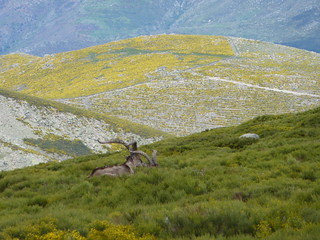 Spain Ibex Hunt & Driven Partridge Hunts 44