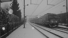 Trains in the snow (Tren di Cdrico) Tags: snow am belgium 80 belsele nmbs sncb desiro am80 am96 l59 am08 27122014
