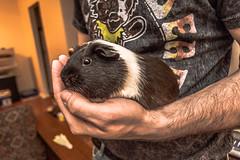 andiputthatonkaykay (10 of 17) (drecoldchane) Tags: weed raw nashville balloon tay dos hamster hamsters fader ryry jonha ryanna tylerthecreator