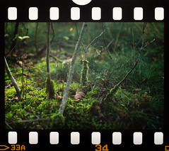Mini Forest (Underp4ntz) Tags: summer color film nature glass forest 35mm nijmegen lens prime for iso100 photo with minolta projector sony dream 85mm ct slide mini dia iso lightleak scanned dreamy 100 konica 135 agfa 36 58mm legacy vennen a7 dx asa100 diafilm precisa rokkor xgm hatertse hatert agfaphoto nymegen 36excl