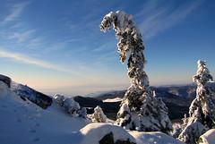 őrszem / sentinel (debreczeniemoke) Tags: winter snow mountains pine forest landscape hiking hegy transylvania transilvania pineforest tájkép gutin erdély hó tél erdő túra fenyő fenyves rozsály kakastaréj canonpowershotsx20is gutinhegység munţiigutâi creastacocoşului munţiigutin gutinmountains