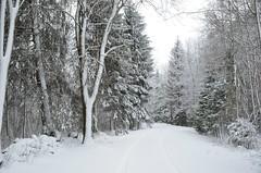 Lumi nii valge ... (anuwintschalek) Tags: road schnee white snow landscape estonia strasse january lumi weiss weg eesti winterlandscape estland 2015 valge d7k jalase nikond7000 talvemaastik 18140vr talitee