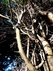 Maisie #9 (amy's antics) Tags: tree cat stuck 9 maisie image9100 100xthe2015edition 100x2015