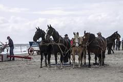 2016-Ameland040 (Trudy Lamers) Tags: wadden ameland eiland paarden reddingsboot reddingsactie