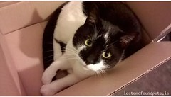 Wed, May 25th, 2016 Lost Male Cat - Raheny, Foxfield Grove, Dublin (Lost and Found Pets Ireland) Tags: dublin cat lost may 2016 raheny lostcatrahenydublin