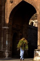 Fort Still Alive... (Rohaan Ali Photographics) Tags: still fort alive punjab rohtas