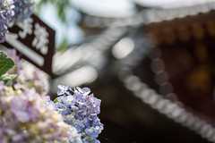 Yata-dera Temple (K/Y2nd) Tags: canon eos 5d mark iii tokina atx m100 pro d 100mm f28 macro