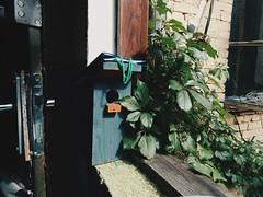 nesting box (will we ever meet again) Tags: life door stilllife closeup still quiet peace box ivy coffeeshop squat windowsill nesting squatlife vscocam