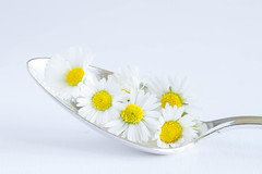 148/366: A spoonful of daisies (judi may) Tags: flowers white macro yellow closeup daisies whitebackground highkey canon7d day148366 366the2016edition 3662016 27may16