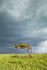 wind Blown Tree (Rachel Dunsdon) Tags: storm tree clouds windswept bent southcoast 2016