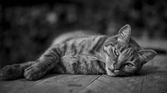 Observe... (Strange Artifact) Tags: sony a7r fe 55mm f18 za carl zeiss sonnar t cat nina captureonepro92 black white schwarz weiss zwart wit bw