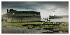 The Lone Rider (D.k.o.w) Tags: horse lighthouse beach harbour tide pony northernireland trot gallop ulster donaghadee irishsea harbourwall northdown canon7dmkii granshaequestriancentre