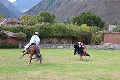IMG_6823 (University of Pennsylvania Alumni) Tags: peru machu picchu cuzco llama