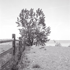Inside the Dog Park by the Lake_ (Bill Smith1) Tags: beaches fujineopan100acros rolleicordvb hc110b filmshooterscollective june2016 billsmithsphotography