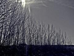 DSCN0750 Invierno (Aprehendiz-Ana Lía) Tags: blancoynegro luz sol nature argentina árboles flickr nw camino bn cielo árbol albero frío fila desnudo fotografía ramas minimalista monocromático hilera noireblanc despojado analialarroude