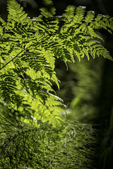 summer (sami kuosmanen) Tags: kuusankoski kouvola kes suomi summer finland forest mets light l luonto valo vriks saniainen green vihre closeup nature europe