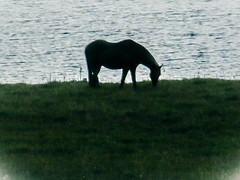 Horse Silhouette (SnapDizzlDot) Tags: horse lake silhouette wildlife wyoming grazing bighornmountains paintrocklake paintrockwyoming