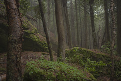 Moss and Mist (MartinSommer) Tags: morning trees mist ontario fog landscape moss woods nikon tobermory