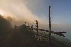 Into The Fog (Gen 5) Tags: vietnam mu cang chai rice terraces fog sunrise asia farm