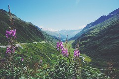 Home alone (FlavioSarescia) Tags: mountains mountain walk hike flowers summer sun sunshine switzerland travel wander wanderlust berge schweiz sommer hot sky blue nature landscape