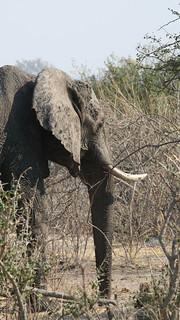 Namibia Dangerous Game Safari - Caprivi Strip 78