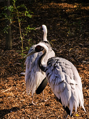 P1050418 (inèsd) Tags: bird oiseau échasse pélican afrique animal
