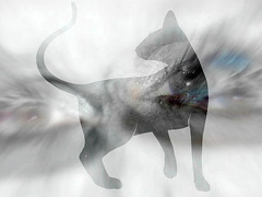 An Eerie Halloween Night (soniaadammurray - OFF) Tags: digitalphotography manipulated experimental collage ghost eyes cat halloween eerie nighttime selfportrait
