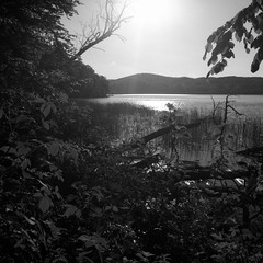 sun kisses water&branches (my analog journey) Tags: pentaconsixtl fujineopanacros100 mediumformat homedeveloped kodakhc110 hc110 developer:brand=kodak developer:name=kodakhc110 lakelaach laacherseeeifel blackwhite mov movformatcom ©bymikemov 042016 filmdev:recipe=10996 film:brand=fuji film:name=fujineopanacros100 film:iso=100
