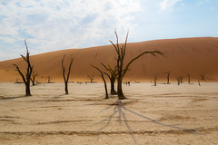 ghost and shadows (plucciola) Tags: africa tree sand desert dune namibia acacia deadvlei anm regionedihardap