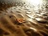 Autumn Beach 2 (dubdream) Tags: ocean autumn light sea españa seascape beach water lumix sand playa atlantic panasonic leafs colorimage wetreflection asturia playalafranca dubdream dmcgx7