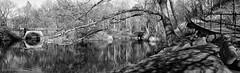 A Lakeside Ramble (CVerwaal) Tags: newyork centralpark lakes bridges panoramas ramble olympusem5 mzuiko25mmf18