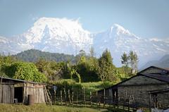 Nepal - Annapurna South and Hiunchuli seen from Pothana (Agnieszka Eile) Tags: nepal mountains nature trekking trek asia village himalaya annapurna hiunchuli annapurnasanctuary