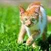 Mr. TF Focusing on Something   Oil Painting (AnNamir™ c[_]) Tags: wallpaper cats animal photoshop nikon sigma malaysia getty oilpainting oilpaint kucing kualakubu oilpaintingfilter d300s annamir mrtf
