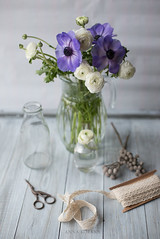 (Anna Korkka) Tags: flowers flower spring ranunculus anemon анемон ранунклюс